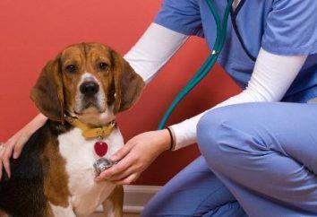 Wyprysk u psów: opis przyczyn i cech leczenia w domu