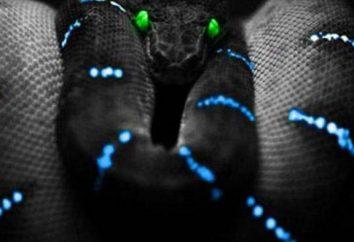 język programowania Python: pętle