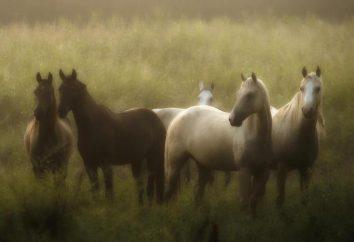 O que significa se o sonho a mulher viu cavalos