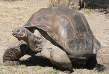 tartaruga scheletro della struttura. Struttura terreno tartaruga, il rosso della sezione