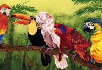 Parrot. Pernatikov rasy w całej okazałości