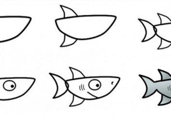 Jak narysować rekina: kursy mistrzowskie dla różnych grup wiekowych