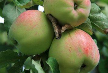 Le principali varietà di meli per Russia Centrale