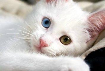 Niesamowite Van koty