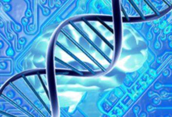 Grundlagenforschung: Beispiele. Grundlagen- und angewandte Wissenschaft