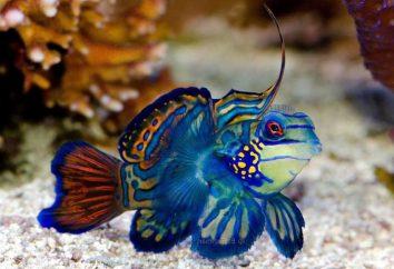 Bel pesce: specie, nomi. Il pesce più bello del mondo