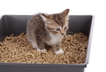 Jak nauczyć kociaka do WC: Porady przyszłego właściciela