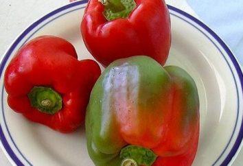 Propriétés utiles et teneur en calories du poivre bulgare