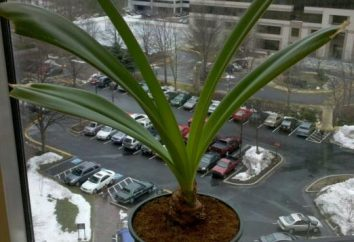 Perché non fiorire Amaryllis al chiuso?