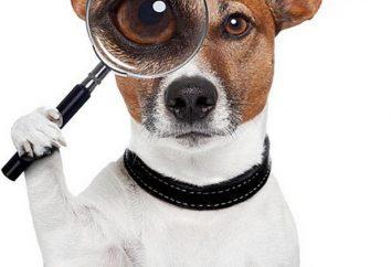 Les chiens qui ne jettent pas et n'a pas d'odeur