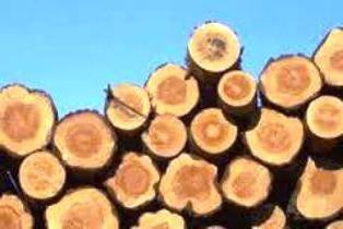 Do que depende da densidade da madeira