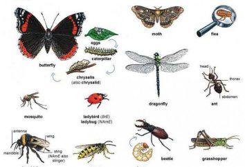 Insectes classe: exemples, types, caractéristiques