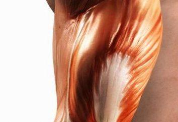 Comment cultiver musculaire chez les personnes formées?