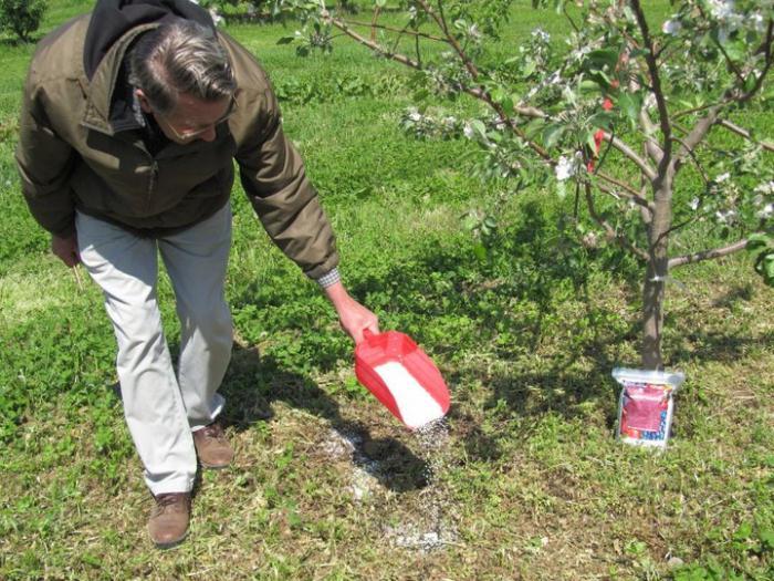wann obstbäume düngen
