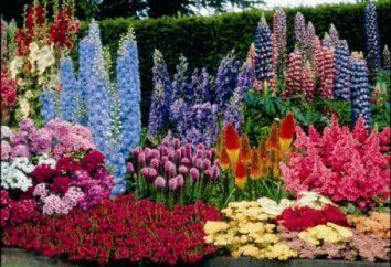Kwiat łóżko z bylinami – ozdobą każdej krajobrazu