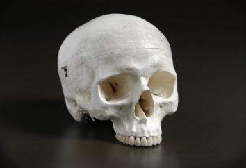 Cechy Wiek czaszki. Czaszka dziecka. Szwy czaszki anatomia