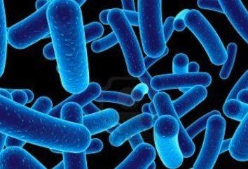 I batteri sono gli agenti causali di qualsiasi malattia? patologie causate da batteri