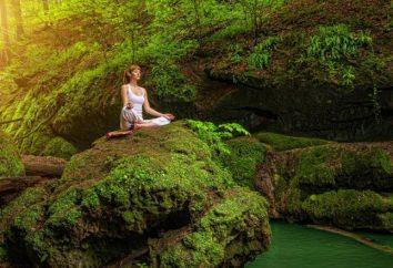 Forêt – une source d'énergie pour l'homme. Le rôle des forêts dans la vie des gens